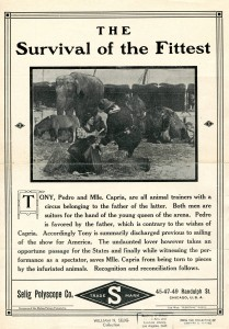 Release_flier_for_THE_SURVIVAL_OF_THE_FITTEST,_1911